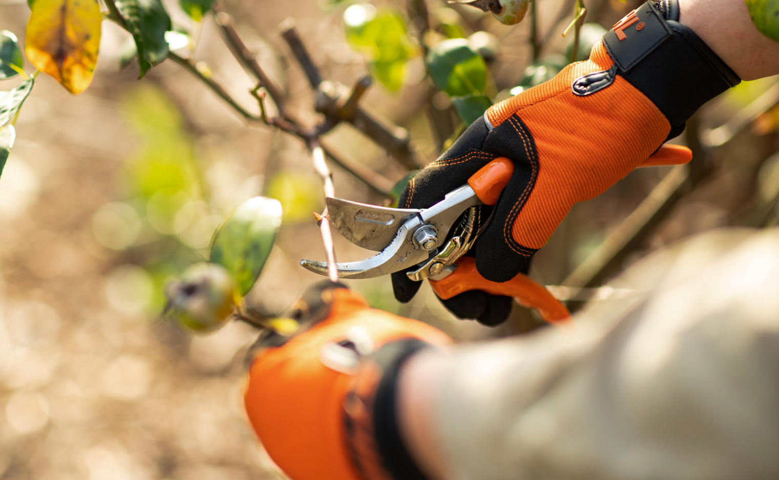 Preparing your garden for Spring