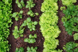 How To Create A Veggie Patch From Scratch